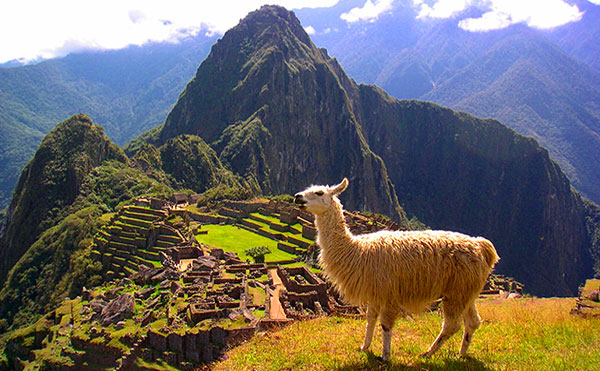 Llama — Machu Picchu